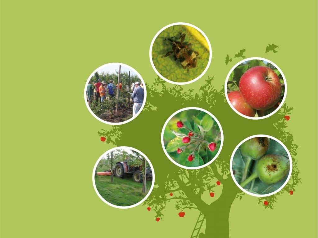 Les principales clés du verger bio transfrontalier – Pommes et poires – une approche globale