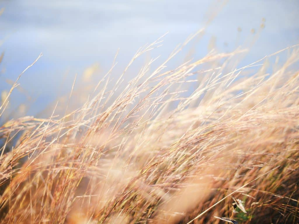 Développement d'une filière céréalière bio au Moulin de Ferrières – 6 déc