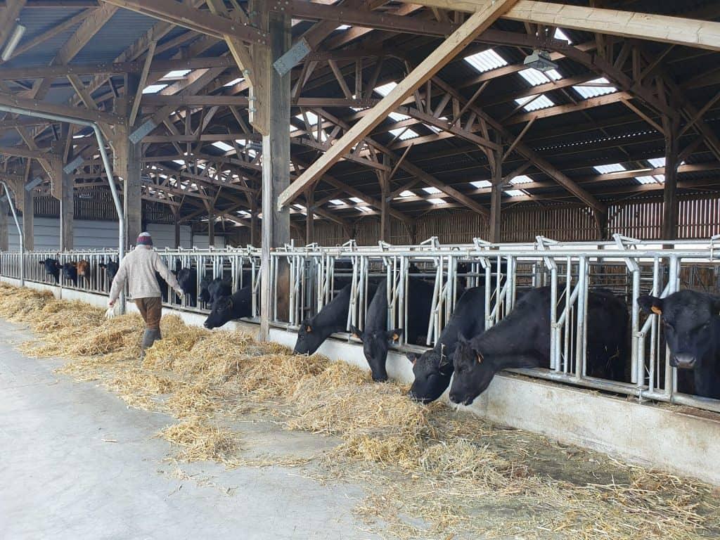 Semaine Bio pour les Pro - En Ferme- Session Conversion bio & Dégustation de différentes races bovines bio