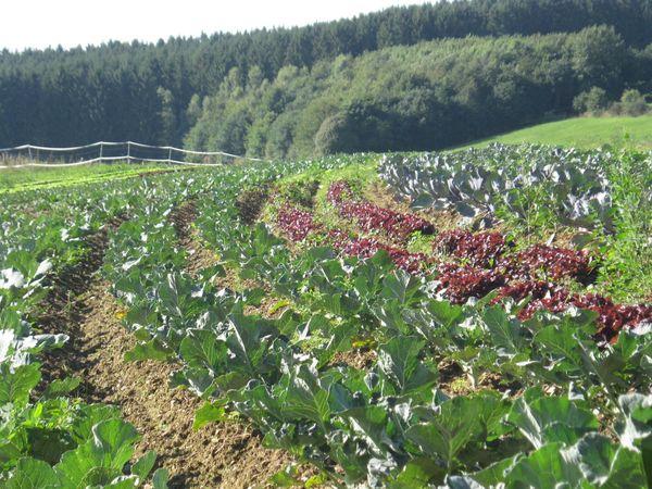 Formation : Matières actives phytosanitaires en légumes biologiques – 3 novembre 2021 – en vrai !